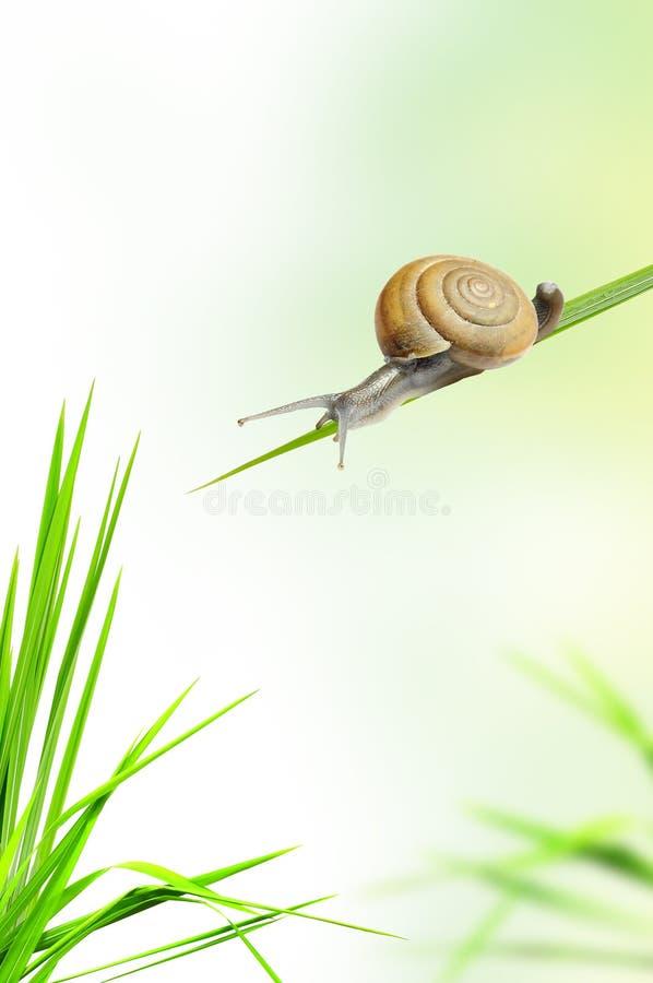Caracol en la hierba fresca imagen de archivo libre de regalías