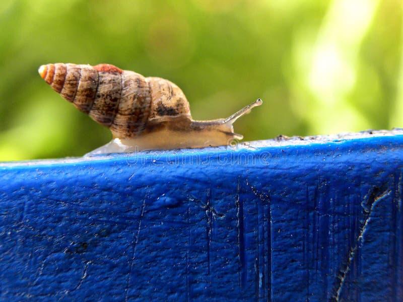 Caracol espiral do shell fotografia de stock royalty free