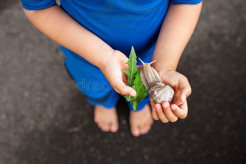 Caracol joven de la tenencia del muchacho en manos y la alimentación de él con las hojas foto de archivo