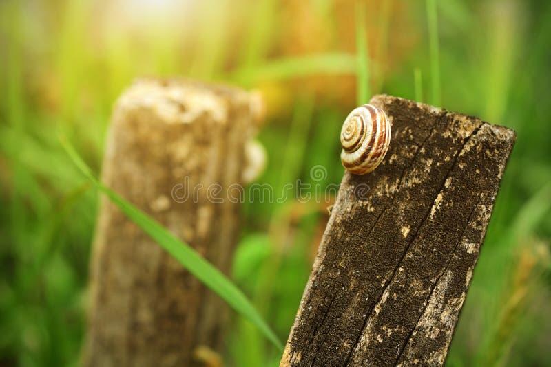 Caracol pequeno que descansa no prado fotos de stock