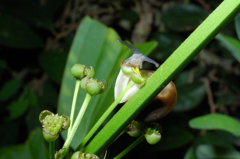 Caracol que come el polen amarillo fotos de archivo