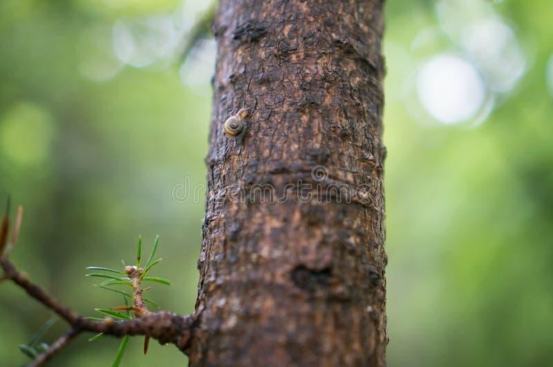 Download Caracol Que Rasteja Em Uma árvore Foto de Stock - Imagem de lento, esforço: 65581390