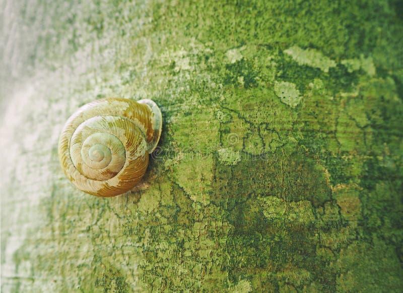 Caracol que se arrastra en la corteza del árbol imagen de archivo