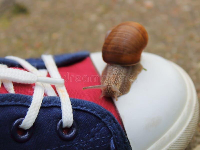 caracol que se arrastra en una zapatilla deportiva adentro imagenes de archivo