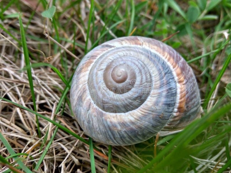 Caracol Shell em um campo verde foto de stock royalty free
