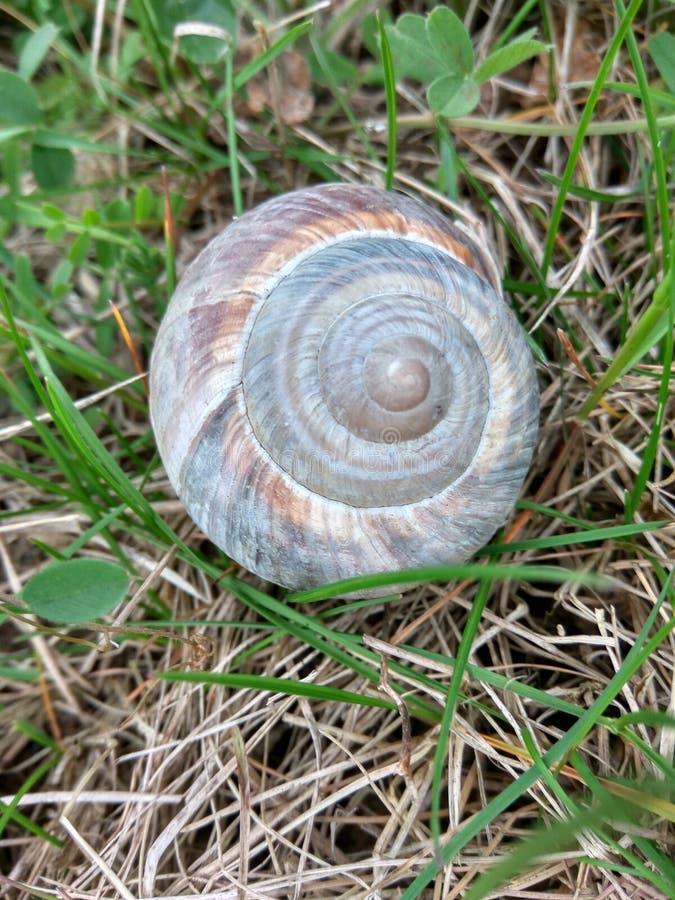 Caracol Shell em um campo verde fotografia de stock