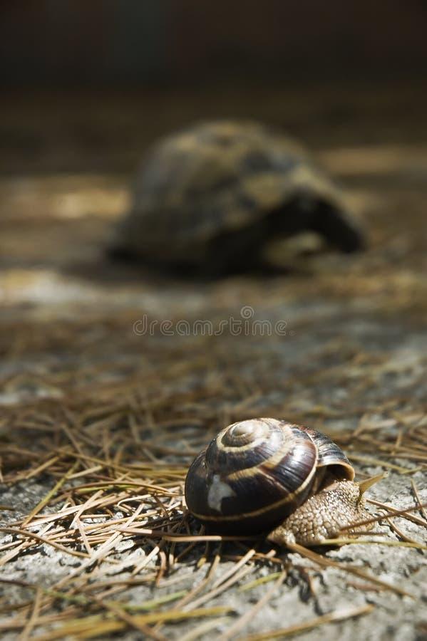 Caracol y tortuga imagen de archivo
