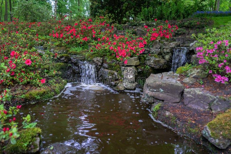 Característica tranquilo da água em um jardim verde bonito luxúria da floresta com as flores densas da folha e do rododendro imagens de stock royalty free