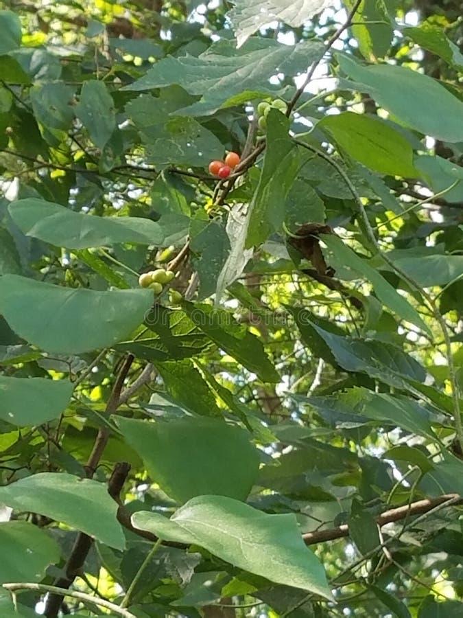 Características das árvores fotos de stock