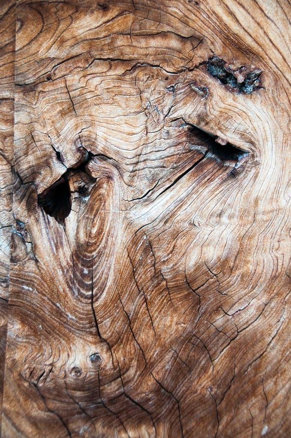 Características faciales abstractas en el corte transversal del tronco de árbol fotografía de archivo