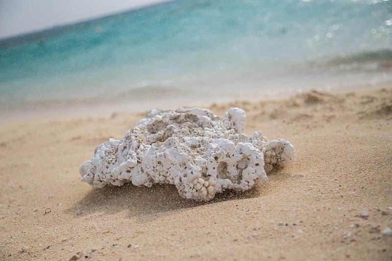 Caral en île de Giftun photo stock
