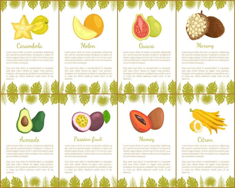 Carambola and Watermelon Citron Passion Set Vector. Carambola and watermelon set with poster and leaves decoration vector. passion fruit, citron and avocado royalty free illustration