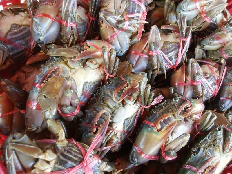 Caranguejo da lama de Tailândia fotografia de stock royalty free