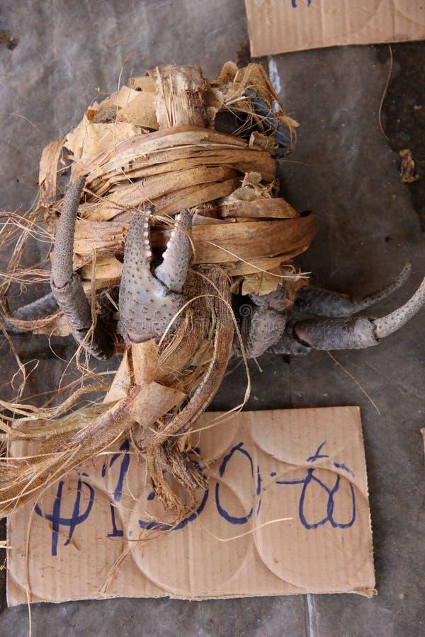 Caranguejo de coco foto de stock