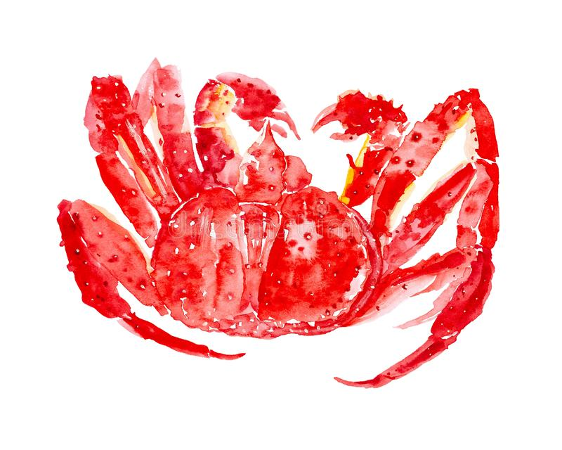 Caranguejo de rei vermelho cozinhado Ilustra??o da aquarela isolada no fundo branco fotos de stock