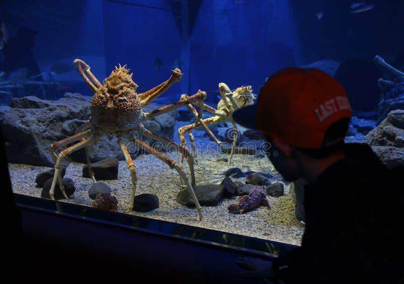 Caranguejo do mar profundo imagens de stock royalty free