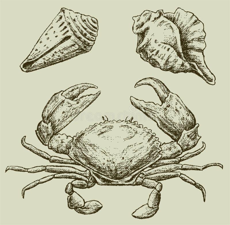 Caranguejo e seashells ilustração royalty free