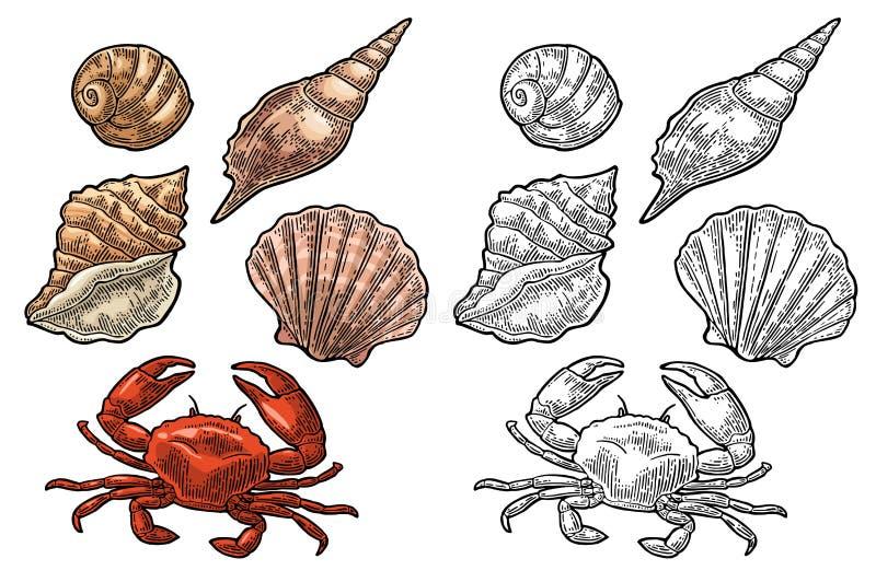 Caranguejo e shell isolados no fundo branco Gravura do vetor ilustração stock