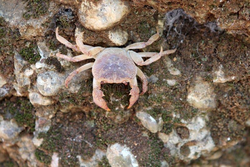 Caranguejo, mar animais Conhecimento da natureza Pelos olhos da natureza imagem de stock