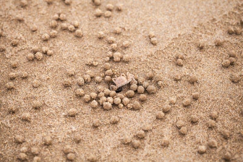 Caranguejo ou areia-bebedoiro autom?tico do bebedoiro autom?tico da areia fotos de stock royalty free