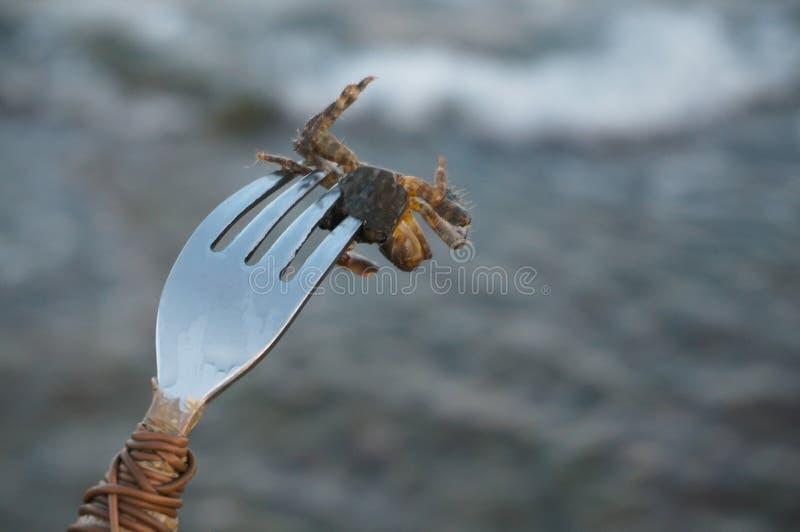 Caranguejo pequeno foto de stock