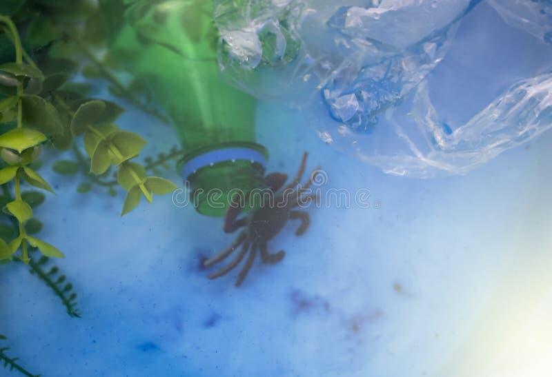 Caranguejo pequeno enredado num saco de plástico Poluição plástica dos oceanos Conceito de ecologia e proteção do ambiente fotografia de stock royalty free