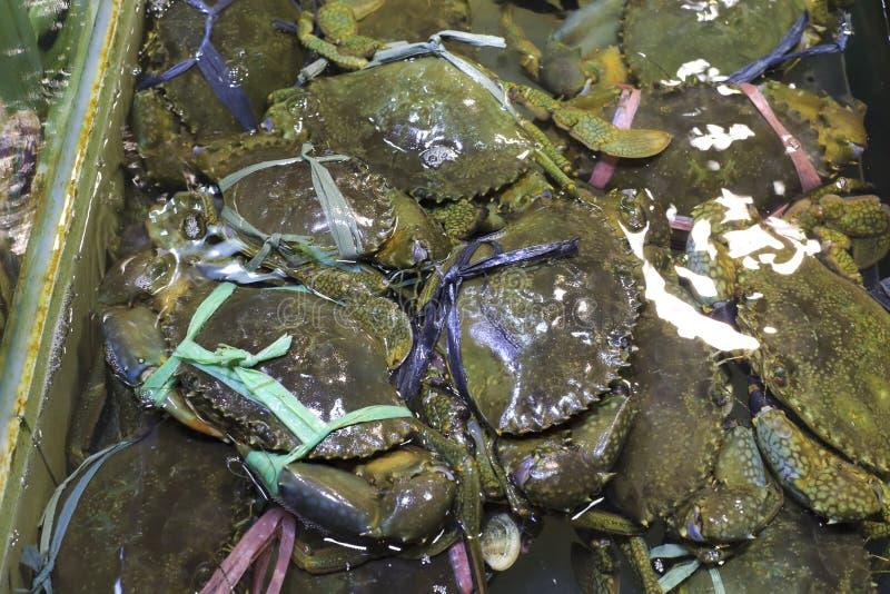 Caranguejo verde imagens de stock