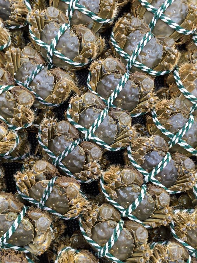 Caranguejos imagem de stock