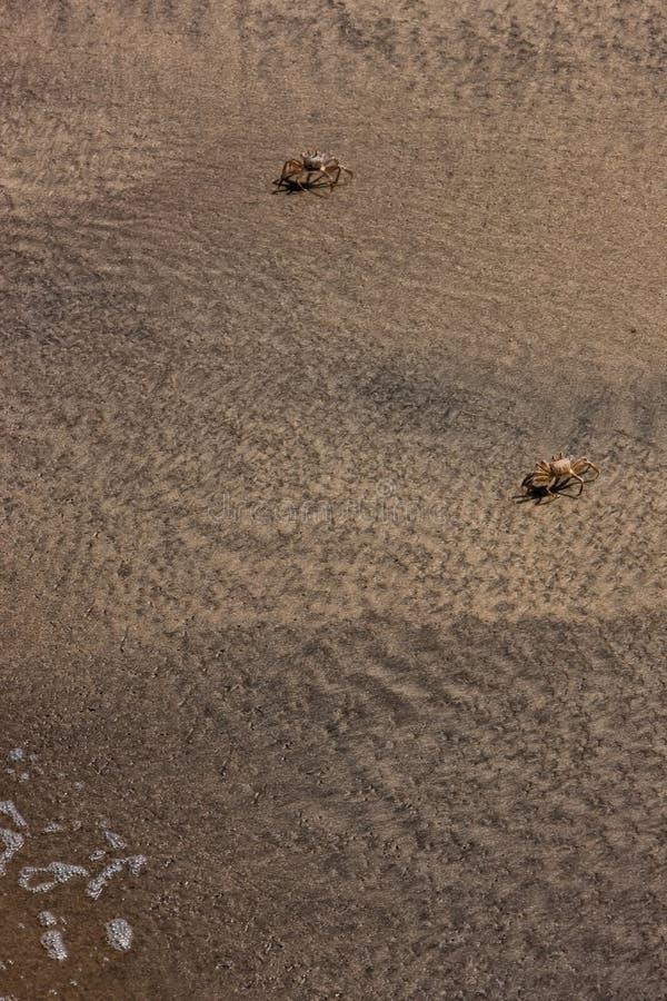 Caranguejos a andar na praia Visto de acima foto de stock royalty free
