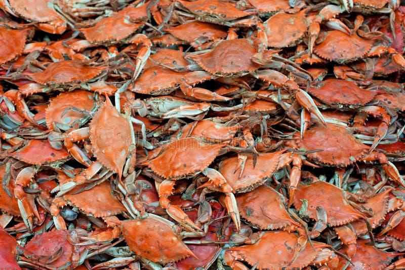 Caranguejos azuis imagens de stock