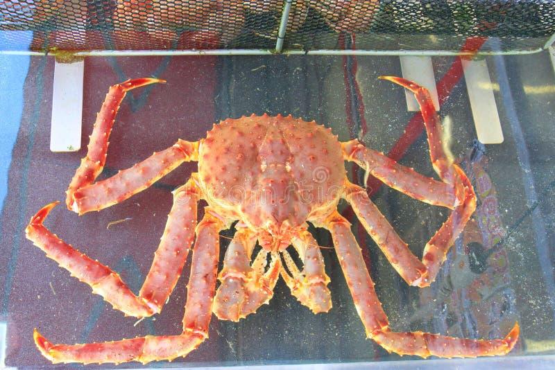 Caranguejos de rei do mar de Taraba no mercado de peixes imagens de stock