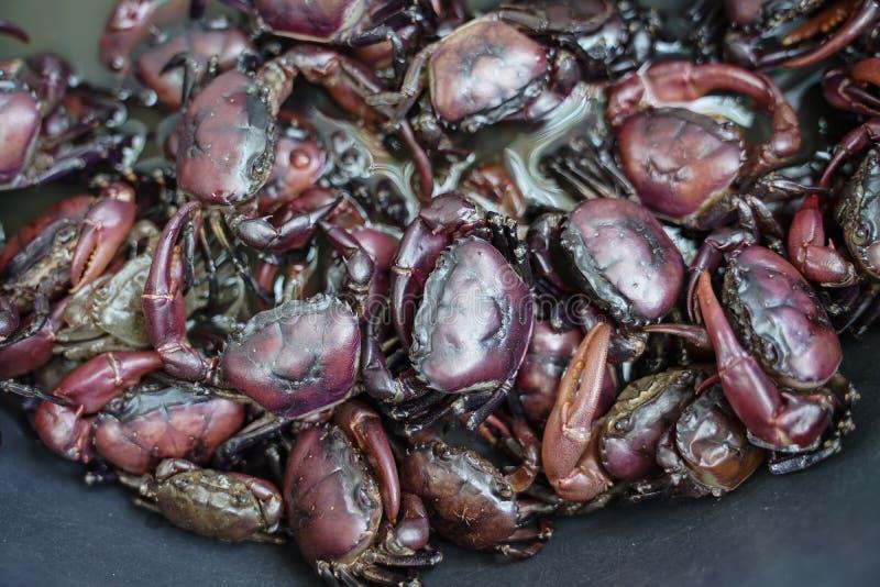 Caranguejos de Ricefield imagem de stock royalty free