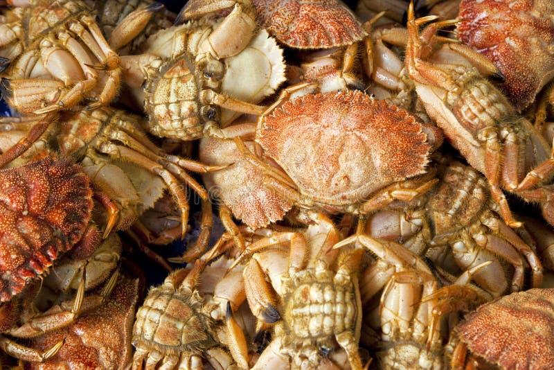Caranguejos frescos fotos de stock