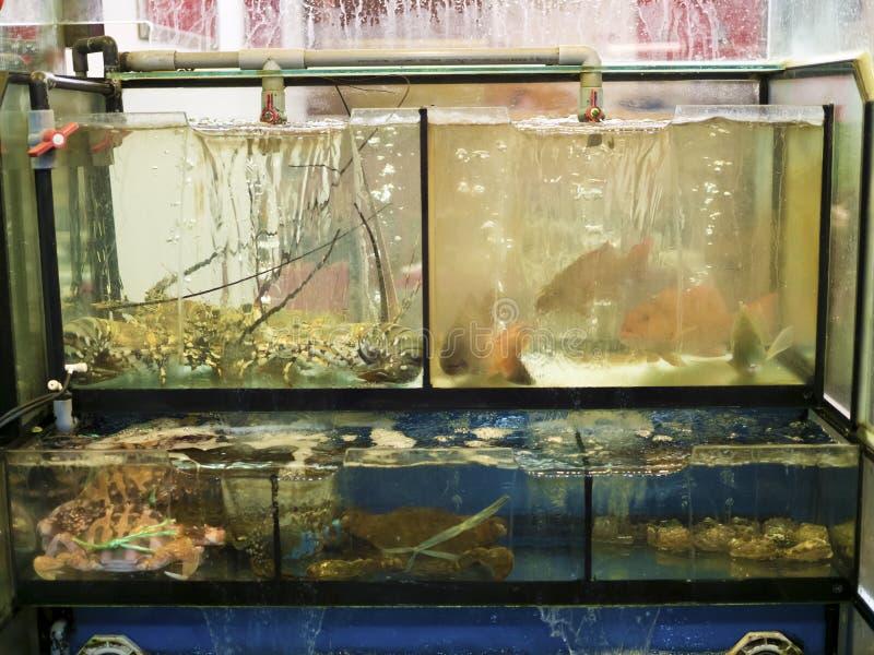Caranguejos, lagostas e peixes vivos frescos nos aquários fotos de stock