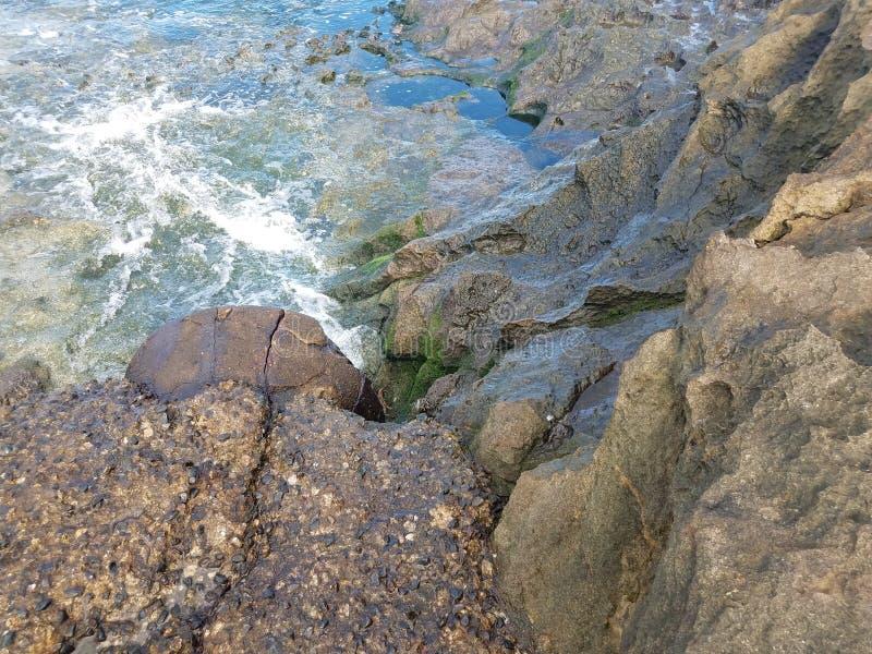 Caranguejos na pedra molhada ou rochas com algas e água em Porto Rico foto de stock