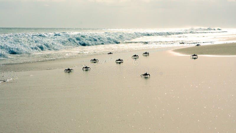 Caranguejos na praia fotografia de stock