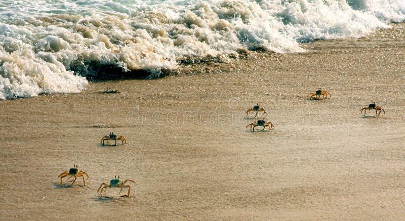 Caranguejos na praia imagens de stock royalty free