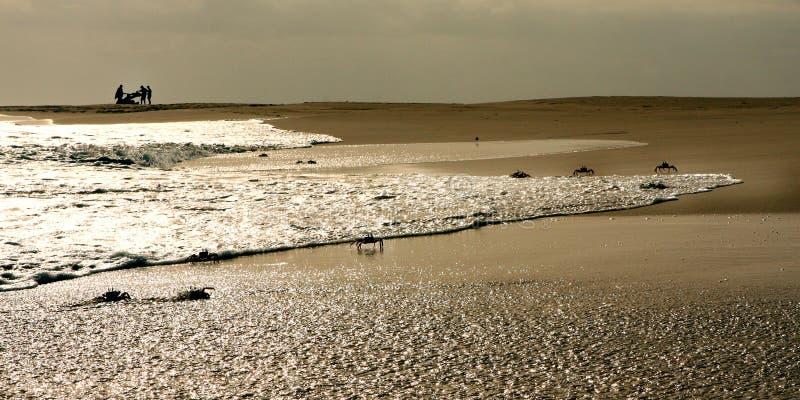 Caranguejos na praia imagens de stock
