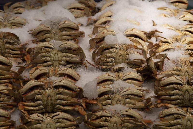 Caranguejos no gelo foto de stock royalty free