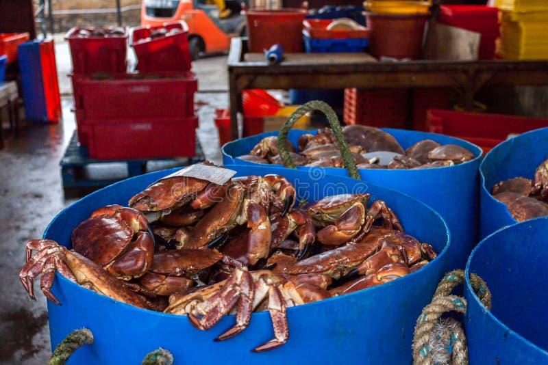 Caranguejos no porto Orkney, Escócia fotografia de stock