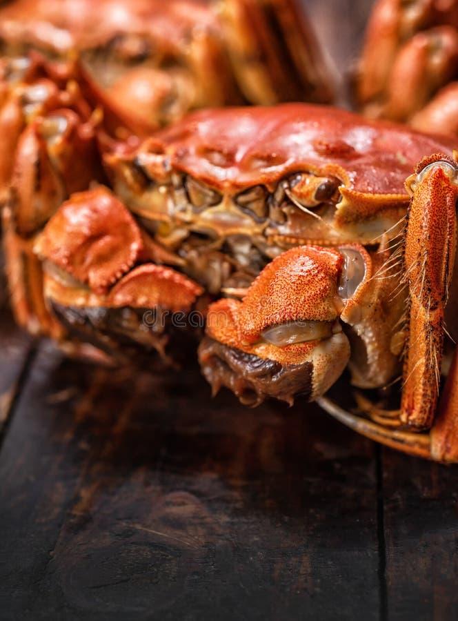 Caranguejos peludos cozinhados imagens de stock