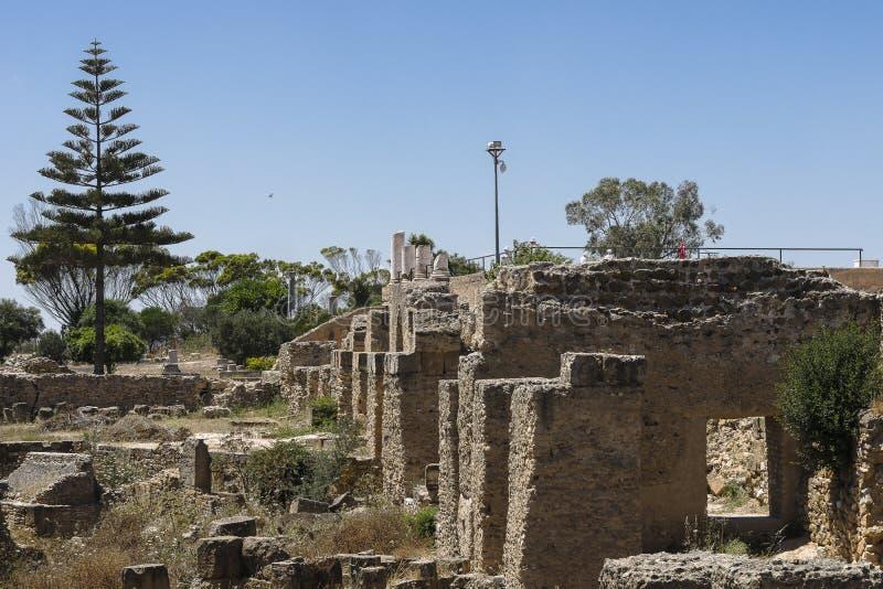 Caratagina in Tunisia stock image