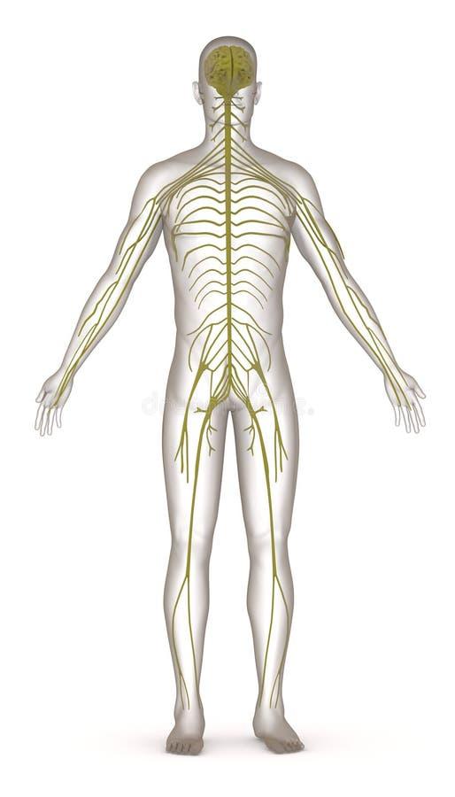 Carattere artificiale con il sistema nervoso royalty illustrazione gratis