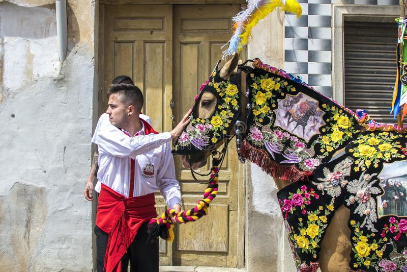 Caravaca de la Cruz, Spanien, Maj 2, 2019: H?st som st?tas p? Caballos Del Vino arkivfoton