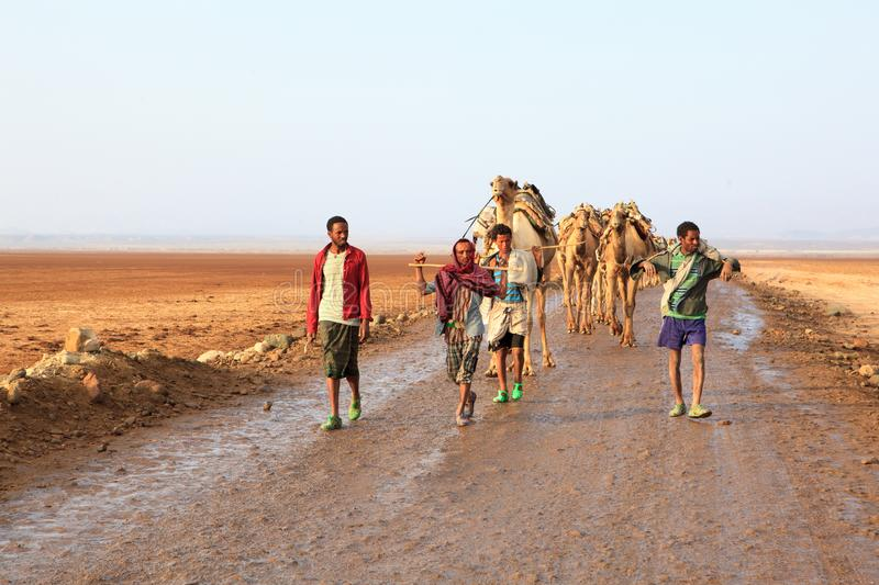 Caravan of camels. Walking across Danakil Depression at sunrise to get the salt and bring it back to the towns for sale. Ethiopia, January, 2018 stock photos