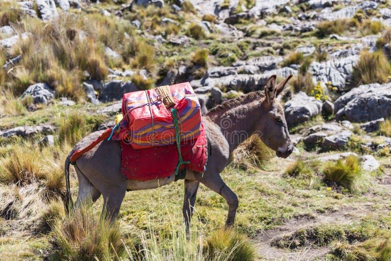 Caravan in Cordillera. Donkey caravan in Cordiliera Huayhuash, Peru, South America royalty free stock photo