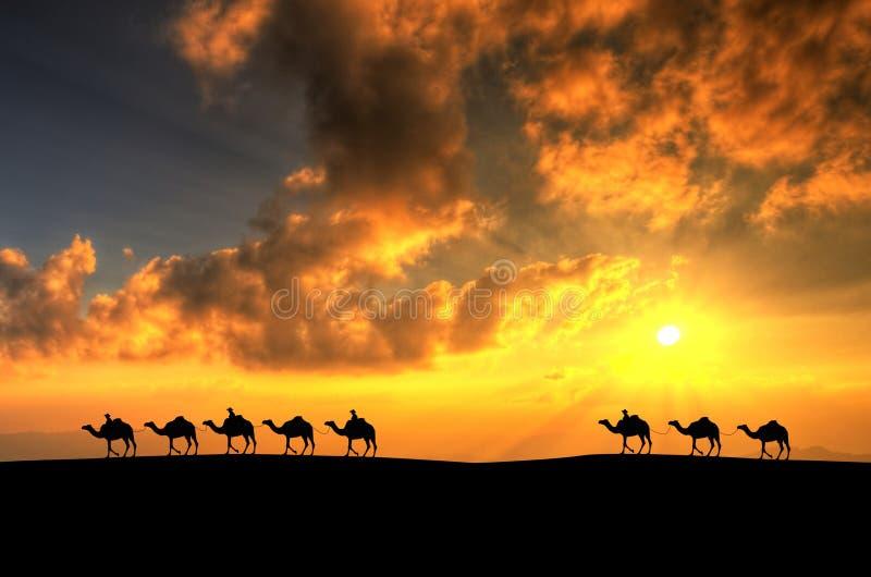 Caravan del cammello immagine stock