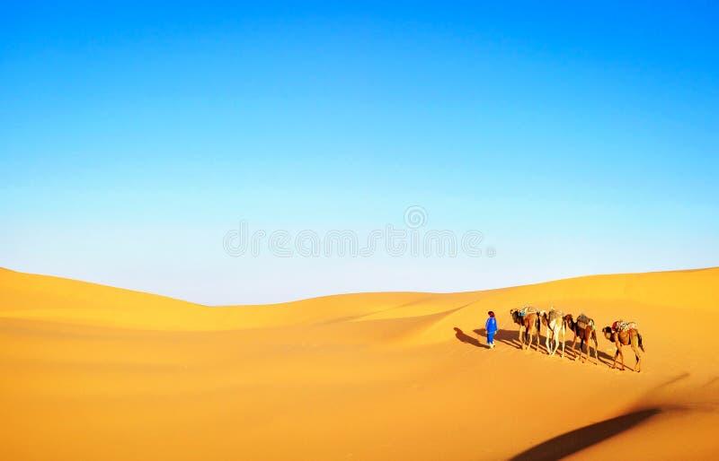 Caravan del cammello che passa attraverso le dune di sabbia in Sahara Desert, fotografia stock libera da diritti