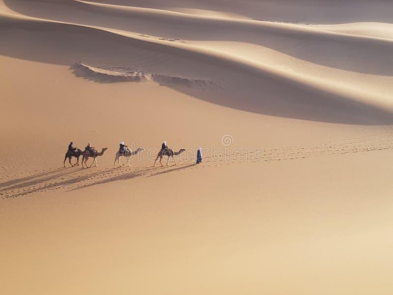 Caravan del cammello in deserto immagine stock