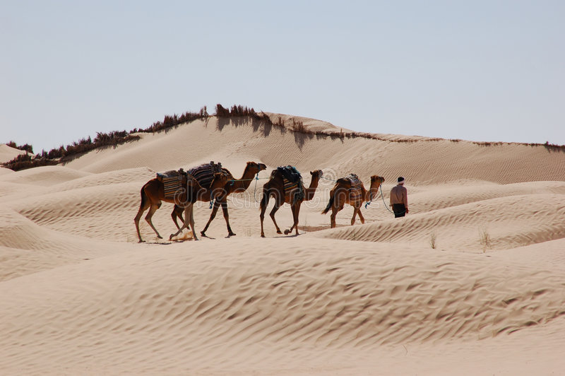 Caravan in desert Sahara. Camel caravan in desert Sahara royalty free stock photo